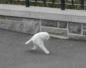 Felis Bipedalis